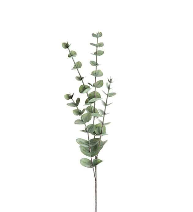 Eucalyptus 60cm