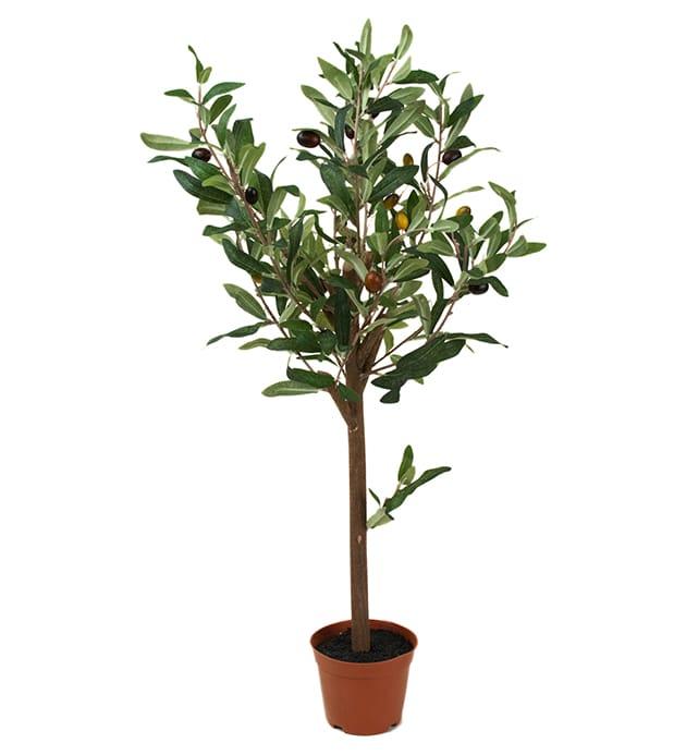 Olivträd 60cm