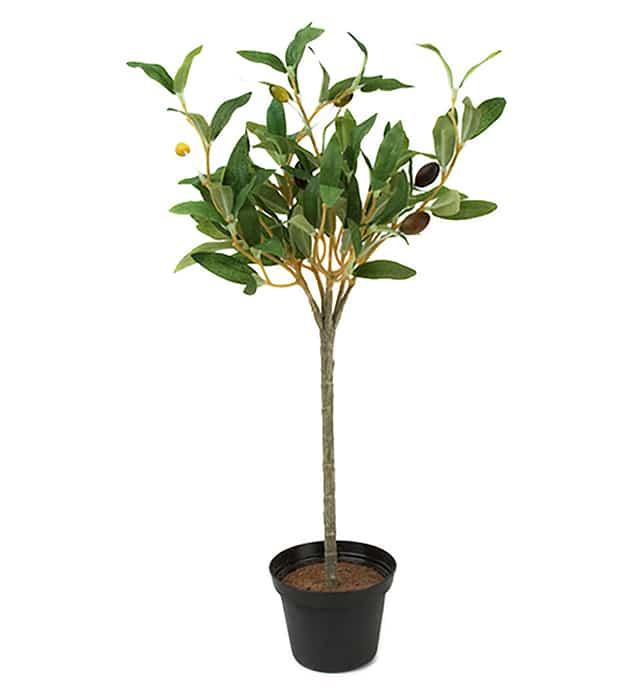 Olivträd 40cm
