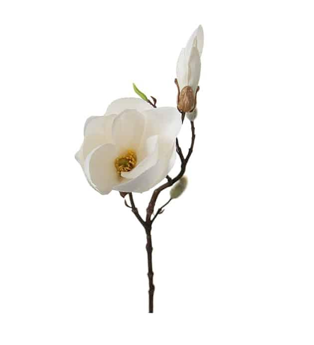 Magnolia 40cm