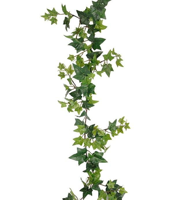 Murgröna girlang spretig
