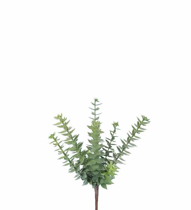 Stick succulent grön