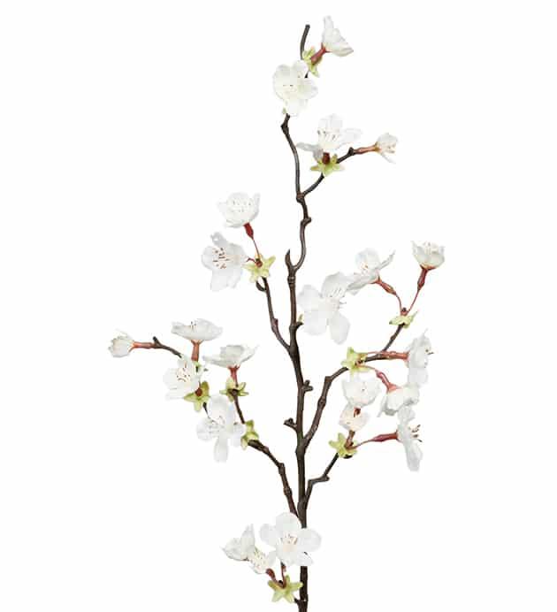 Körsbärsblom kvist